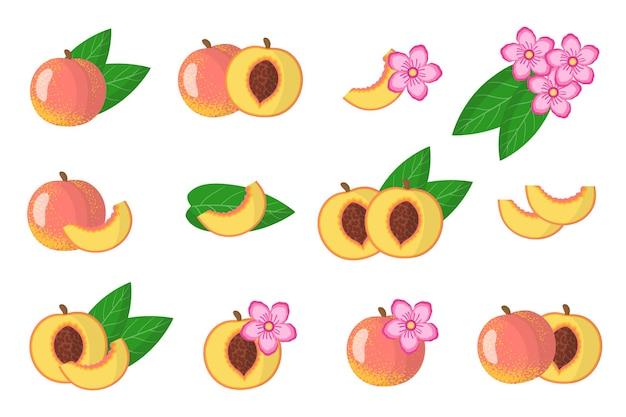 Serie di illustrazioni con frutta esotica pesca, fiori e foglie isolati