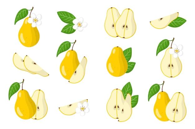 Serie di illustrazioni con frutti esotici di pera, fiori e foglie isolati
