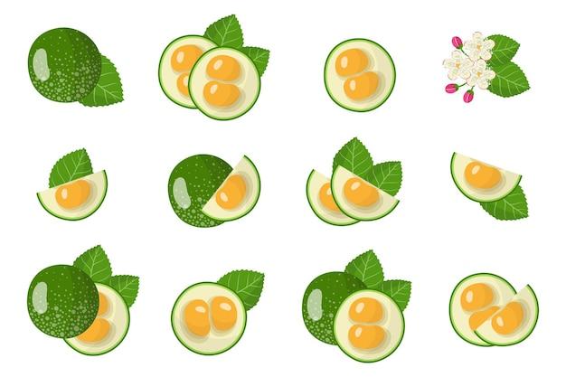 Serie di illustrazioni con pequi frutti esotici, fiori e foglie isolati