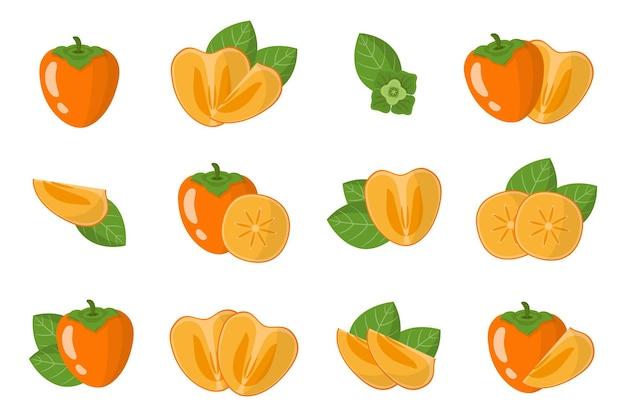 Serie di illustrazioni con cachi frutti esotici, fiori e foglie isolati