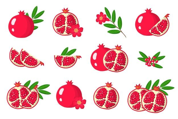 Serie di illustrazioni con frutti esotici di melograno, fiori e foglie isolati