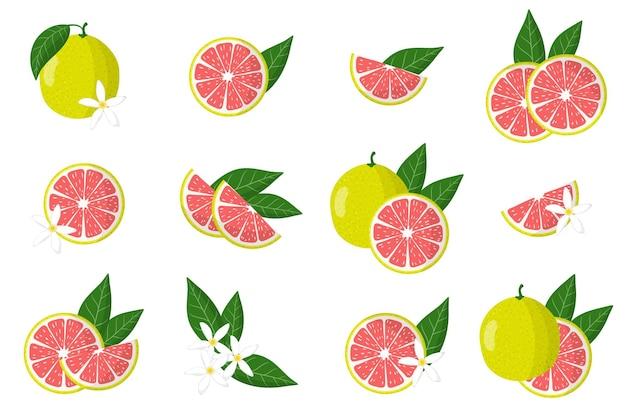 Serie di illustrazioni con pomelo agrumi esotici, fiori e foglie isolati su sfondo bianco.