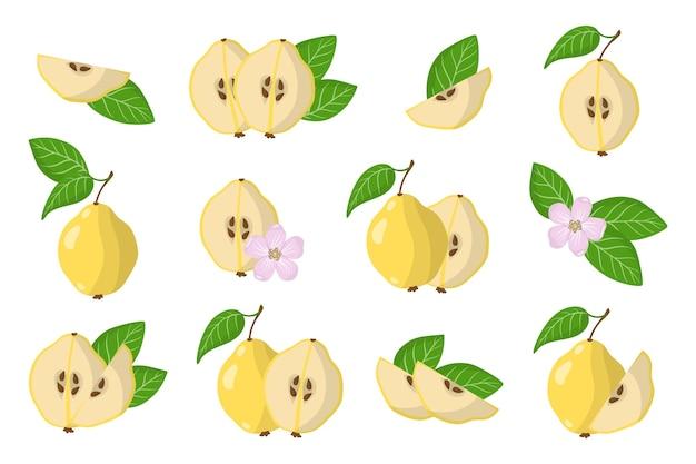 Serie di illustrazioni con mele cotogne frutti esotici, fiori e foglie isolati