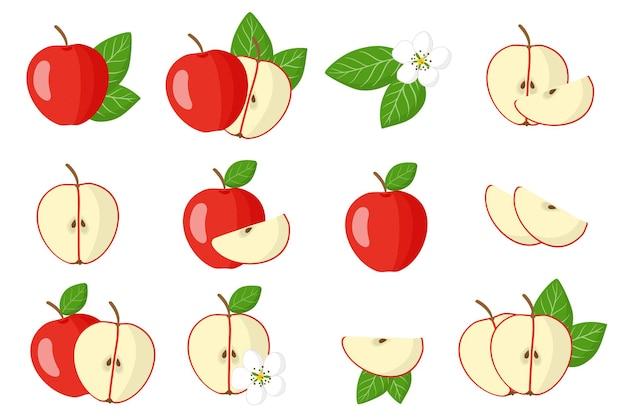Serie di illustrazioni con frutta esotica mela rossa, fiori e foglie isolati su sfondo bianco. set di icone isolato.