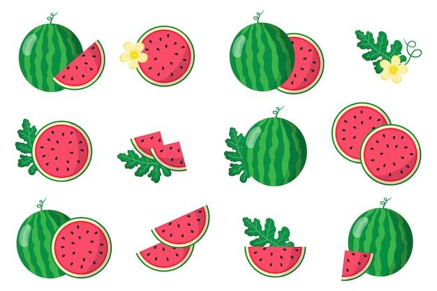 Serie di illustrazioni con anguria frutti esotici, fiori e foglie isolati