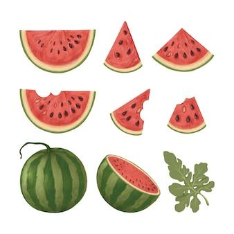 Serie di illustrazioni con fette di anguria e anguria