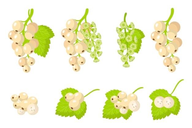 Insieme delle illustrazioni con con frutti esotici ribes bianco, fiori e foglie isolati