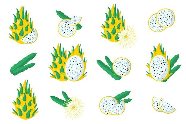 Serie di illustrazioni con frutta esotica pitaya gialla, fiori e foglie isolati su sfondo bianco.