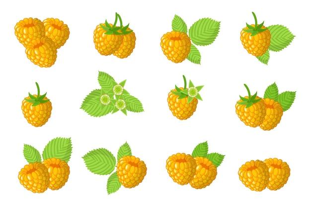Serie di illustrazioni con frutti esotici lampone giallo, fiori e foglie isolati