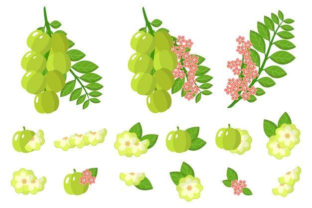Insieme delle illustrazioni withstar uva spina frutti esotici, fiori e foglie isolati