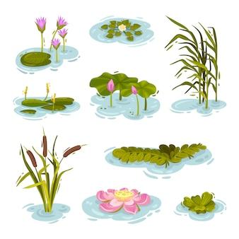 Insieme di immagini di piante sull'acqua. illustrazione su sfondo bianco.