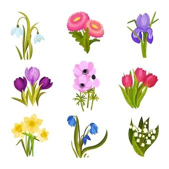 Set di immagini di fiori primaverili