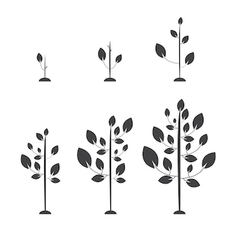 Set di immagini di alberi dal germe al grande albero. illustrazione vettoriale. stile piatto.