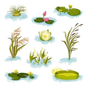 Serie di immagini di ninfee, canna, canna su acqua. illustrazione su sfondo bianco.