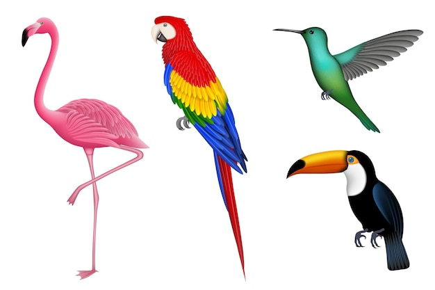Insieme degli uccelli esotici isolati uccelli tropicali. fenicottero pappagallo colibrì e tucano