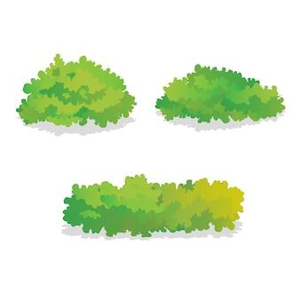 Set di cespugli verdi isolati