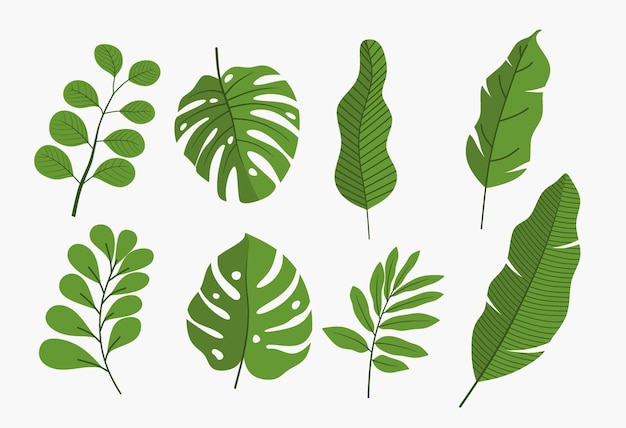 Set di foglie verdi isolate.