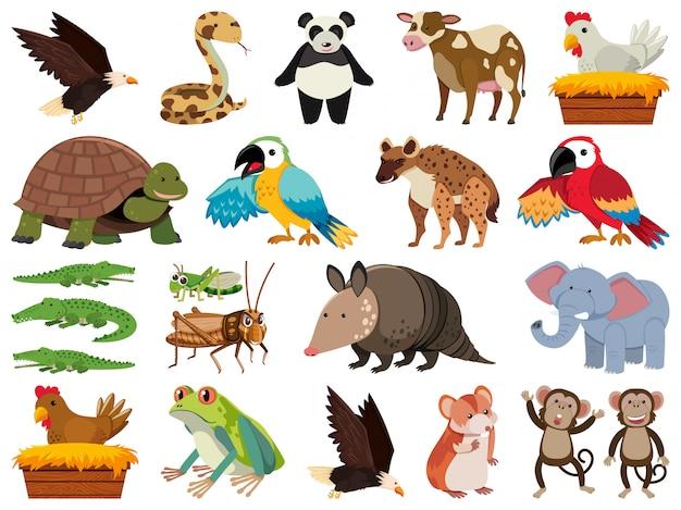 Insieme di animali selvatici di tema oggetti isolati