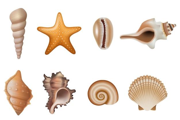 Set di conchiglie e stelle marine isolate