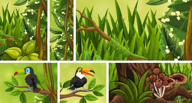 Set di scena della giungla isolato su bianco