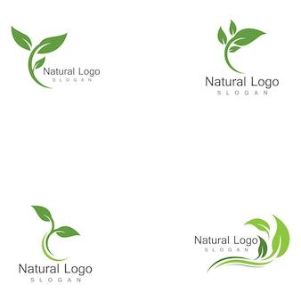 Set di modelli di logo foglia