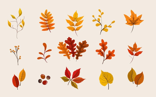 Un insieme di foglie in autunno