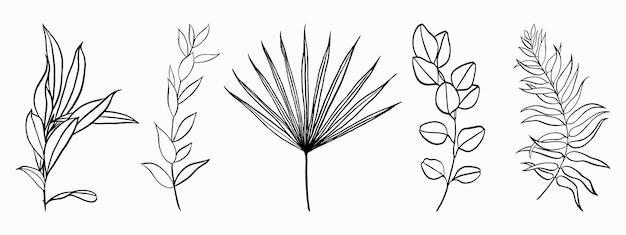 Insieme di foglie disegnate da linee