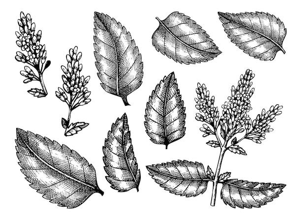 Set di foglie e fiori isolati su bianco