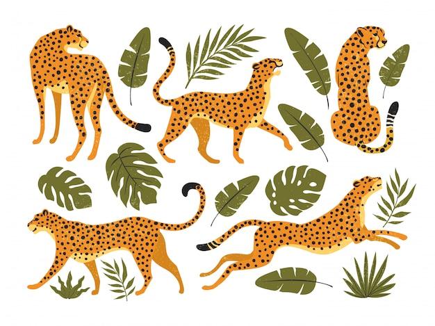 Set di leopardi o ghepardi e foglie tropicali. illustrazione alla moda.