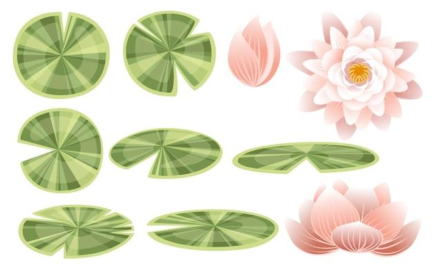 Insieme dell'illustrazione piana di vettore delle parti del loto del giglio su fondo bianco