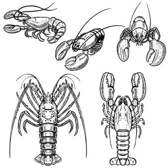 Insieme delle illustrazioni dell'aragosta su fondo bianco. elementi per poster, menu. illustrazione