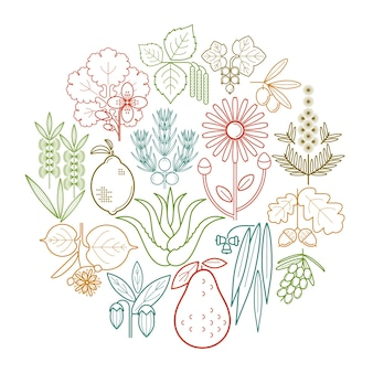 Metta le erbe mediche di colore in cerchio. ribes, oliva, ginepro, celidonia, salvia, avocado, arnica, acacia, tiglio, tea tree, quercia, olivello spinoso, eucalipto, betulla, limone, aloe, jojoba.