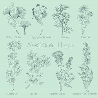 Set di erbe mediche Vettore Premium