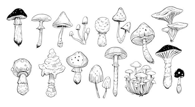 Set di funghi. illustrazione disegnata a mano isolato su bianco