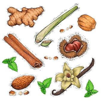 Insieme dell'illustrazione dell'acquerello della raccolta delle spezie e delle noci