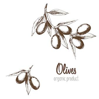 Set di olio d'oliva, rami e ghirlande. prodotto naturale. illustrazione in uno schizzo di stile grafico.