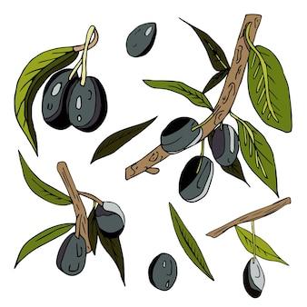Set di olive, ramoscelli, foglie e frutti su uno sfondo bianco isolato.