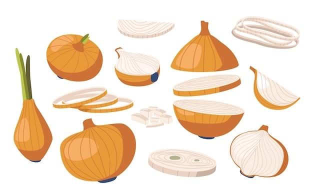 Impostare la verdura della cipolla, la pianta del giardino naturale, la cultura delle verdure. lampadina matura biologica di produzione agricola sana con buccia marrone