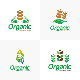 Set di logo per l'agricoltura del grano biologico del grano simbolo del logo del grano o modello dell'icona