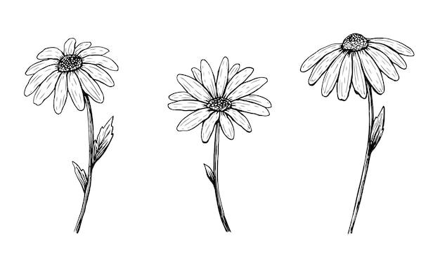 Set di fiori margherita contorno isolati su bianco