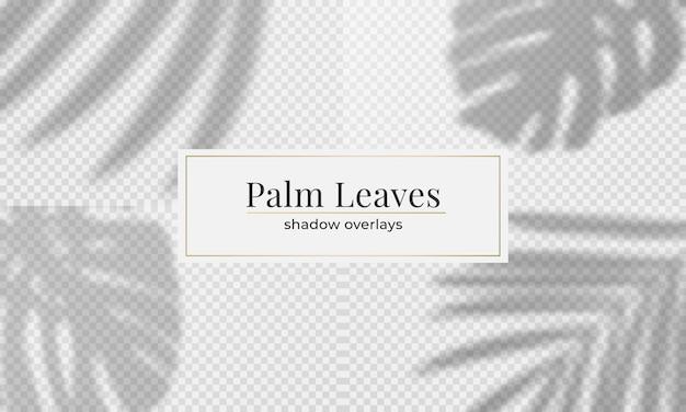 Set di foglie di palma sovrapposizione di ombre. effetto ombra trasparente