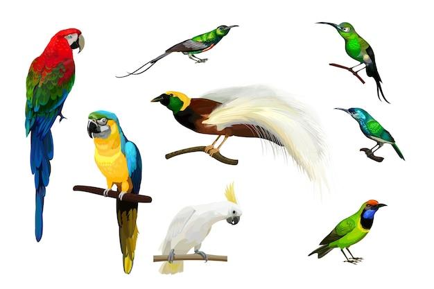Set di pappagalli, colibrì e grande uccello del paradiso