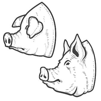 Insieme delle teste di maiale su sfondo bianco. carne di maiale. elemento per, etichetta, emblema, segno, poster. illustrazione.