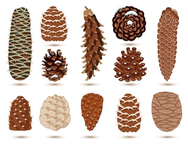Set di pigne di pino e abete isolato su bianco