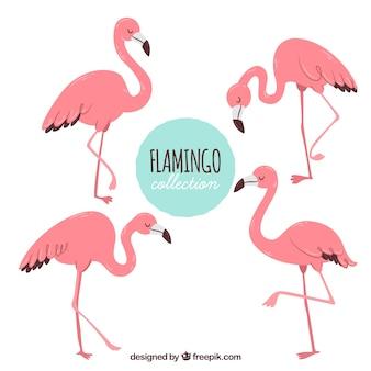 Set di fenicotteri rosa con diverse posture
