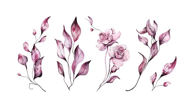 Insieme delle foglie e delle rose dell'acquerello rosa