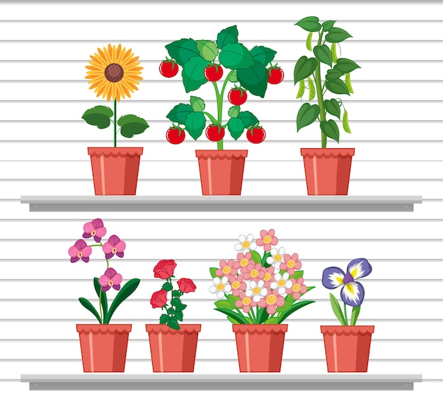 Set di piante sugli scaffali Vettore Premium