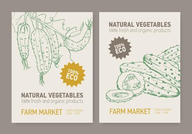 Set di modelli di poster con cetrioli affettati e coltivati sulla vite