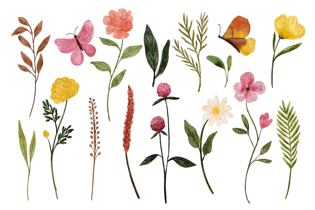 Set di belle illustrazioni ad acquerello di fiori selvatici