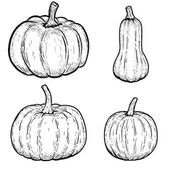 Insieme delle illustrazioni della zucca su fondo bianco. elementi per emblema, segno, poster, carta. illustrazione